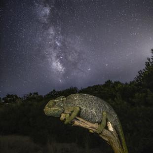 El Camaleón y la Vía Láctea.